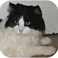 Adopt A Pet :: Snoopy - Plainville, MA