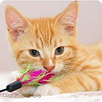 Adopt A Pet :: Harold - Scottsdale, AZ