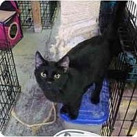 Adopt A Pet :: Chinook - Pendleton, OR
