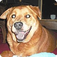 Adopt A Pet :: Adonis & Piccachu - Rancho Palos Verdes, CA
