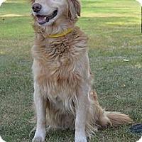 Adopt A Pet :: Bert - Denver, CO