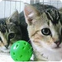 Adopt A Pet :: Tonka - Brea, CA