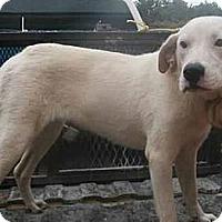 Adopt A Pet :: Ellie - dawson, GA