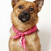 Adopt A Pet :: Penny - New York, NY