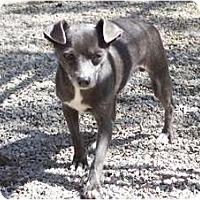 Adopt A Pet :: Birdie - Antioch, IL