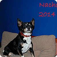 Adopt A Pet :: Nacho - New Orleans, LA