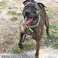 Adopt A Pet :: Roman - Acushnet, MA