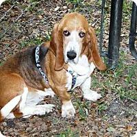 Adopt A Pet :: Bridget - Fort Lauderdale, FL