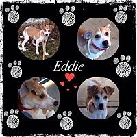 Adopt A Pet :: EDDIE - Coudersport, PA