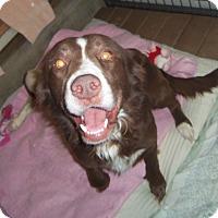 Adopt A Pet :: WINSLOW - Medford, WI