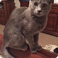 Adopt A Pet :: Yana - Fort Worth, TX