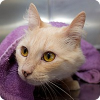 Adopt A Pet :: Ghost - Schererville, IN