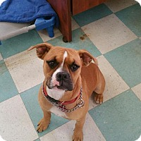 Adopt A Pet :: Phoebe - Jacksonville, AL