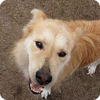 Adopt A Pet :: Indigo  - Snow Hill, NC
