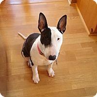 Adopt A Pet :: Lola **Courtesy Cupid** - West Allis, WI