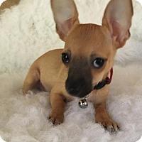 Adopt A Pet :: Sapphire - Fresno, CA