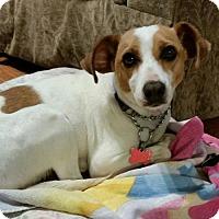 Adopt A Pet :: Sandy - Potomac, MD