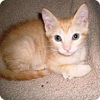 Adopt A Pet :: Ollie - Kirkwood, DE