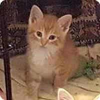 Adopt A Pet :: Indy - Lancaster, PA
