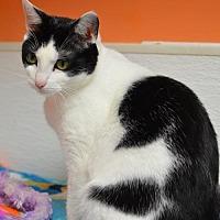 Adopt A Pet :: Skylar 14186 - Atlanta, GA