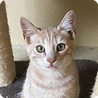 Adopt A Pet :: Steve - Chula Vista, CA