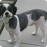 Adopt A Pet :: Lucky - Maynardville, TN