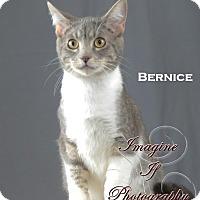 Adopt A Pet :: Bernice - Oklahoma City, OK