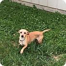 Adopt A Pet :: Shemp