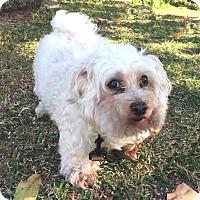Adopt A Pet :: Lucky - Boca Raton, FL