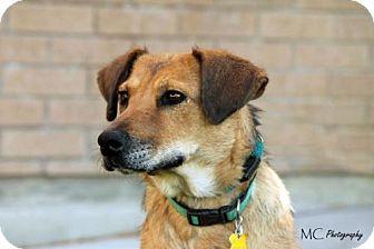 Shepherd (Unknown Type) Mix Dog for adoption in Salt Lake City, Utah - Mommabear