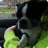 Adopt A Pet :: Tiffany - Prole, IA