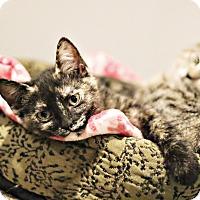 Adopt A Pet :: Loma - Lincoln, NE