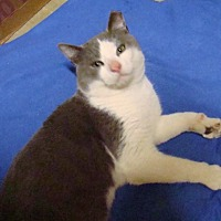 Adopt A Pet :: zz 'Hudson' Courtesy Post - Cincinnati, OH