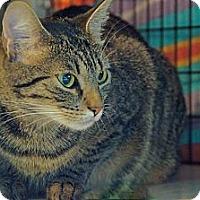 Adopt A Pet :: Keelah - Victor, NY