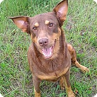 Adopt A Pet :: Silly Syd(ney) - Williston, FL