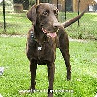 Adopt A Pet :: Jovial Jackson - Brooklyn, NY