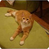 Adopt A Pet :: Seth--PETSMART - Muncie, IN
