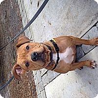 Adopt A Pet :: Kona - Orlando, FL