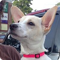 Adopt A Pet :: Peggy - Marietta, GA