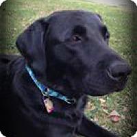 Adopt A Pet :: Zorro - Sinking Spring, PA