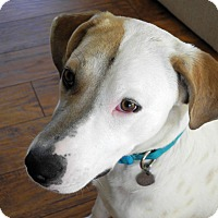 Adopt A Pet :: Greta - Knoxville, TN