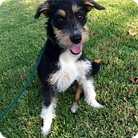 Adopt A Pet :: Spike - Mission Viejo, CA