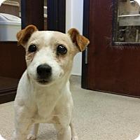 Adopt A Pet :: Sidney - Alpharetta, GA