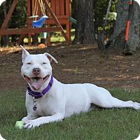 Adopt A Pet :: Pearl - Snellville, GA