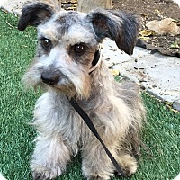 Adopt A Pet :: Colton - Redondo Beach, CA