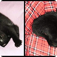Adopt A Pet :: Onyx - Fort Wayne, IN