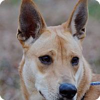 Adopt A Pet :: Cassius (being fostered in GA) - Cranston, RI