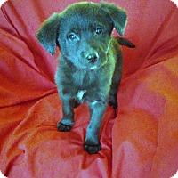 Adopt A Pet :: Luke - Hillsboro, IL