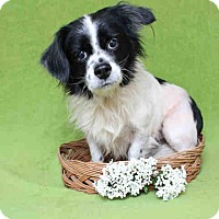 Adopt A Pet :: Craig - Encino, CA