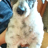 Adopt A Pet :: August-ADOPTION PENDING - Boulder, CO